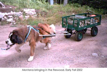 montanawood.jpg