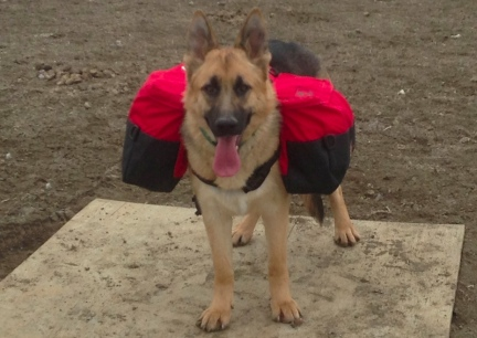Tekoa Wenaha Dog Backpack Front  2014-03-30