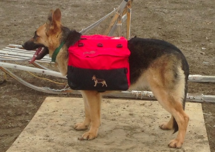 Tekoa Sid View of Wenaha Dog Backpack  2014-03-30